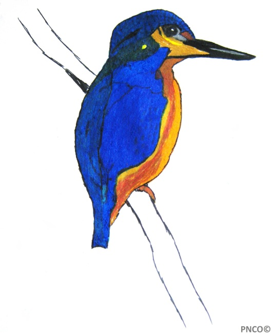 My first blog post: Kingfisher drawing