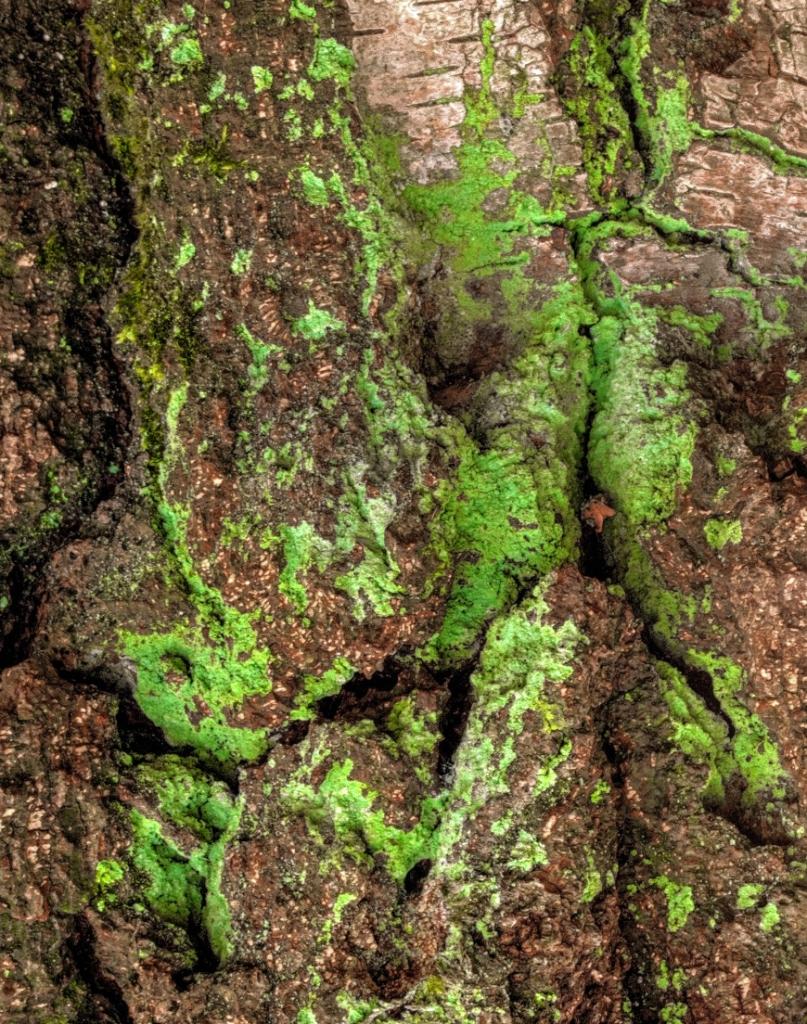 Tree Skin2